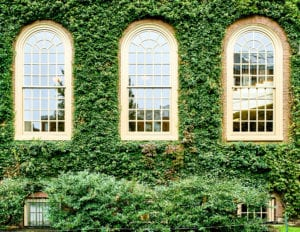three windows with plants
